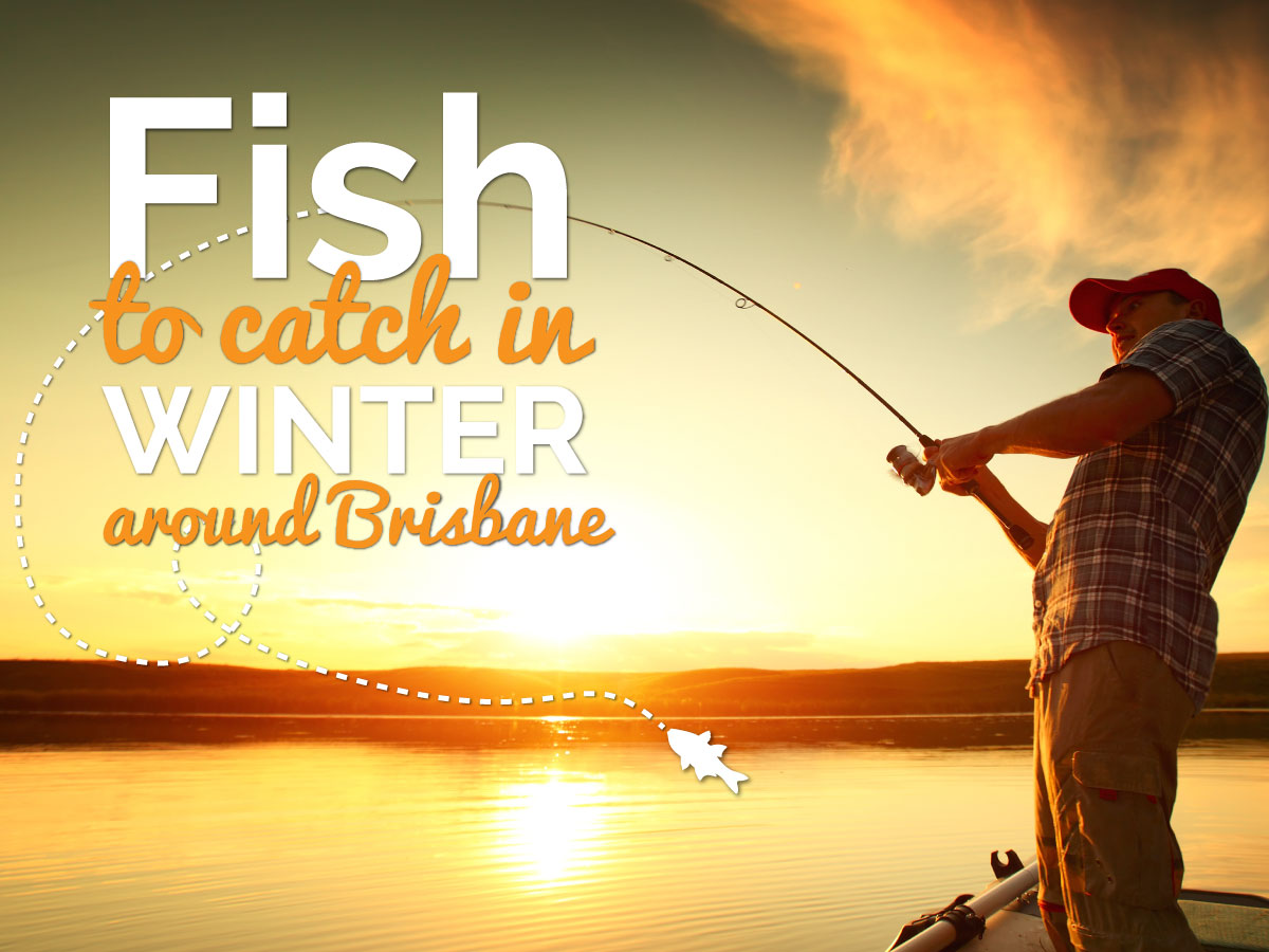 5 Fish to Catch When it's Cold in Brisbane | Star Air